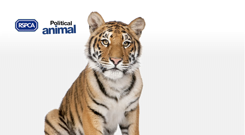 Picture of a Tiger and the RSPCA logo